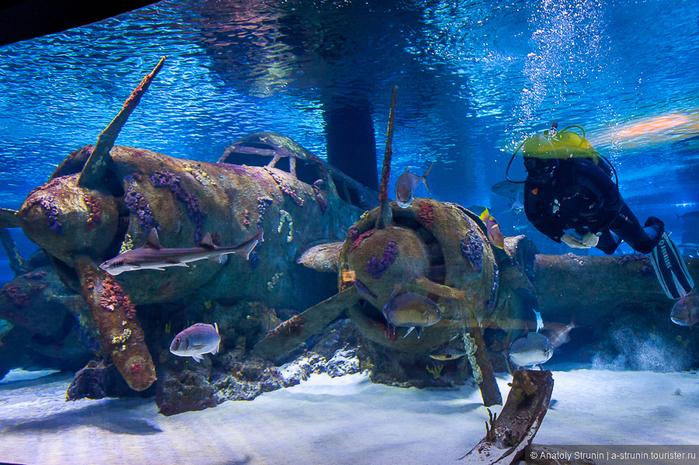 аквариум в анталии 7 (700x465, 584Kb)