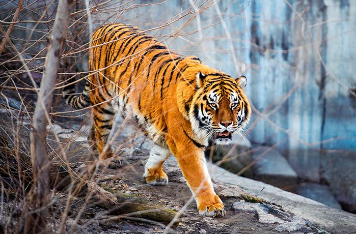 Виды животных, которым человек помог выжить