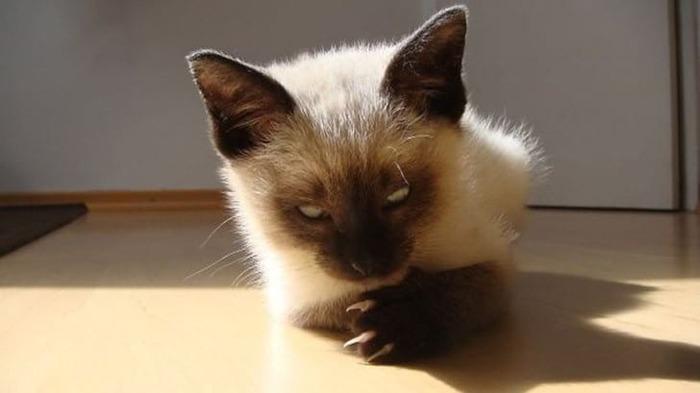 wsi-imageoptim-guilefulcats07 (700x393, 39Kb)