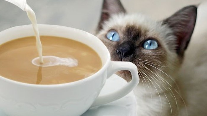 4ee0d74b-9ef7-47a4-b8f3-f96530ac6314-large16x9_coffee_cat_9 (700x393, 40Kb)