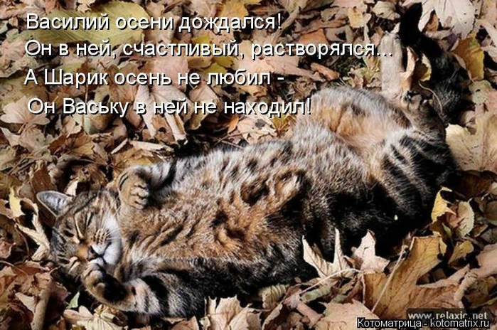 kotomatritsa_c (3) (700x464, 498Kb)