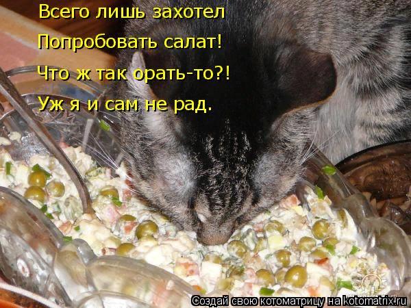 kotomatritsa_F (600x450, 386Kb)