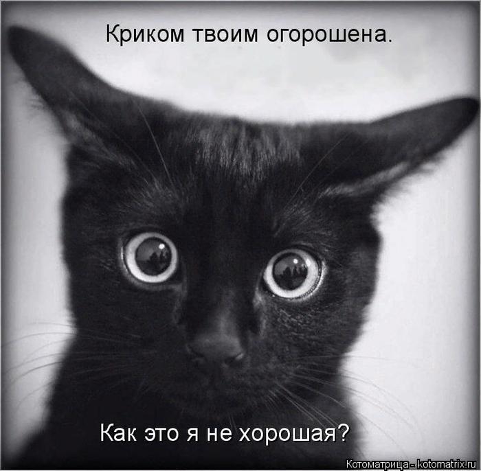 kotomatritsa_L (700x686, 453Kb)