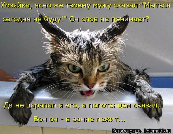 kotomatritsa_P (600x465, 348Kb)