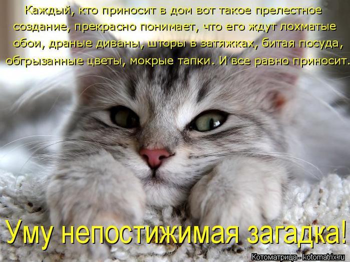 kotomatritsa_O2 (700x524, 74Kb)