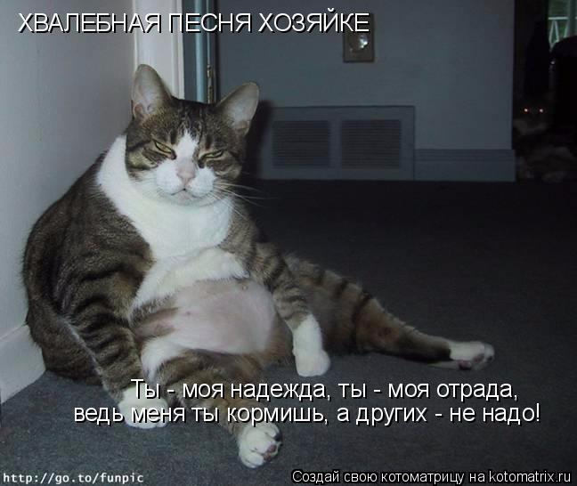 kotomatritsa_K (1) (648x546, 166Kb)