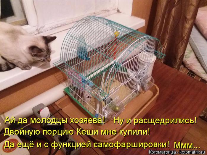 kotomatritsa_R (2) (700x524, 434Kb)