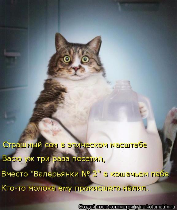 kotomatritsa_yh (577x683, 254Kb)
