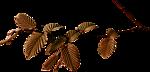 oowv9jz8 (150x72, 12Kb)