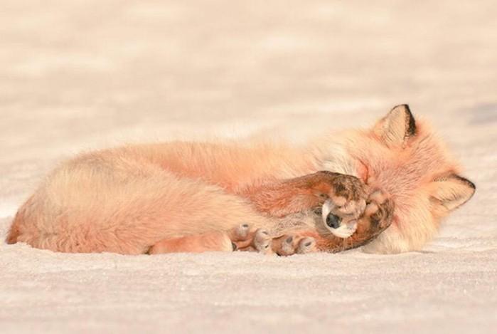7 самых милых животных острова Хоккайдо, которые могут съесть других милых животных
