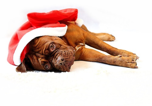 Приметы на удачу в год Собаки /6210208_sobaka_primeti (500x348, 41Kb)