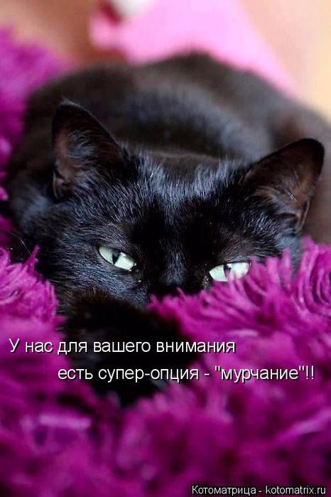 kotomatritsa_2 (466x700, 314Kb)
