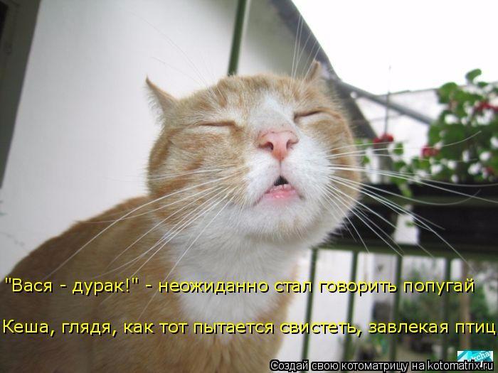 kotomatritsa_C (700x525, 246Kb)