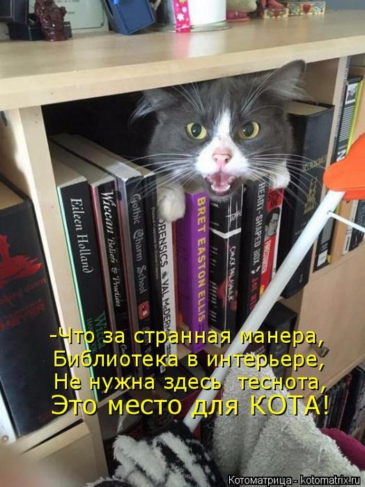 kotomatritsa_l (1) (524x700, 398Kb)