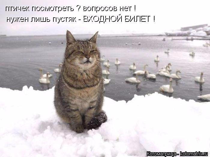 kotomatritsa_W3 (700x525, 170Kb)