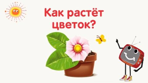 как растёт цветок (480x270, 71Kb)