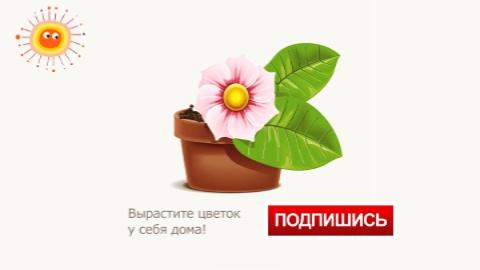 как растёт цветокросток подписывайся (480x270, 49Kb)