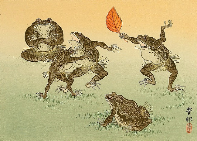 Frog Sumo (649x464, 325Kb)