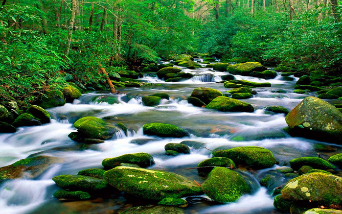 Beautiful-untouched-nature-Pristine-mountain-river-riverbed-rock-with-green-moss-forest-with-dense-vegetation-Landscape-Wallpaper-HD-1920x1200-1440x900 (700x437, 514Kb)