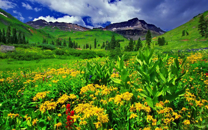 Spring-landscape-Green-grass-yellow-flowers-mountain-peaks-sky-white-clouds-Wallpaper-HD-for-Desktop-full-screen-2560x1600-1440x900 (700x437, 540Kb)
