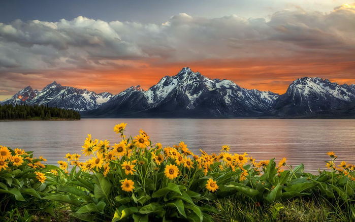 Sunset-over-Grand-Teton-National-Park-yellow-sunflower-flowers-lake-mountain-peaks-with-snow-red-sky-with-clouds-landscape-Wallpaper-HD-1920x1200-1440x900 (700x437, 366Kb)