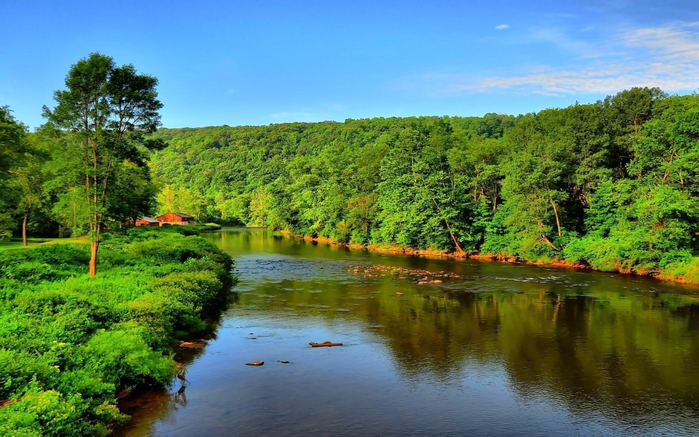 River-leak-of-water-dense-forest-from-green-trees-nature-blue-sky-summer-landscape-for-Desktop-Hd-Wallpaper-1920x1080-1440x900 (700x437, 403Kb)