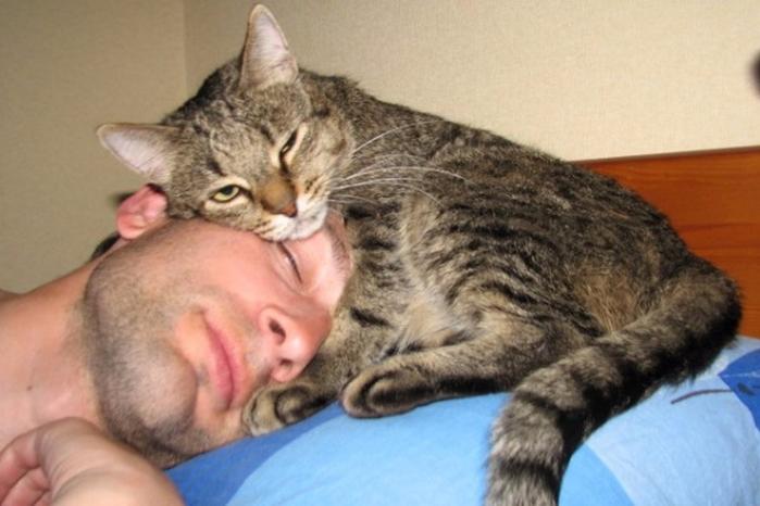 cat15 (700x466, 285Kb)