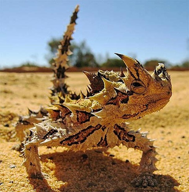 13диковинных животных, очьем существовании мыинедогадывались