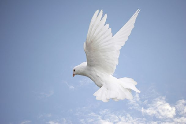 Live-In-Grace-and-Peace-608x405 (608x405, 16Kb)