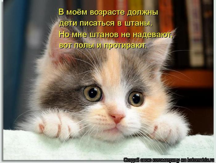 kotomatritsa_v1 (700x529, 58Kb)
