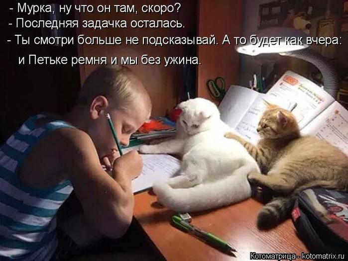 kotomatritsa_Xr (700x525, 328Kb)