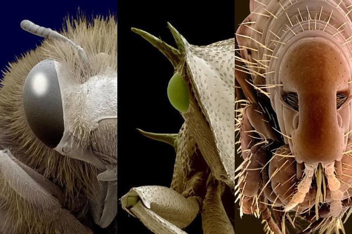 Фото насекомых и пауков, сделанные с помощью электронного микроскопа