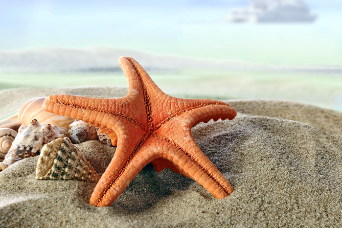 seashells-starfish-summer-834 (700x466, 437Kb)