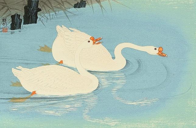 Два лебедя (644x422, 264Kb)