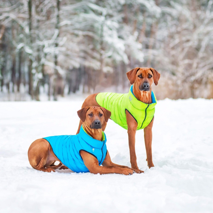 airyvest_dog_jacket_lime_green_blue_1-origin (700x700, 385Kb)