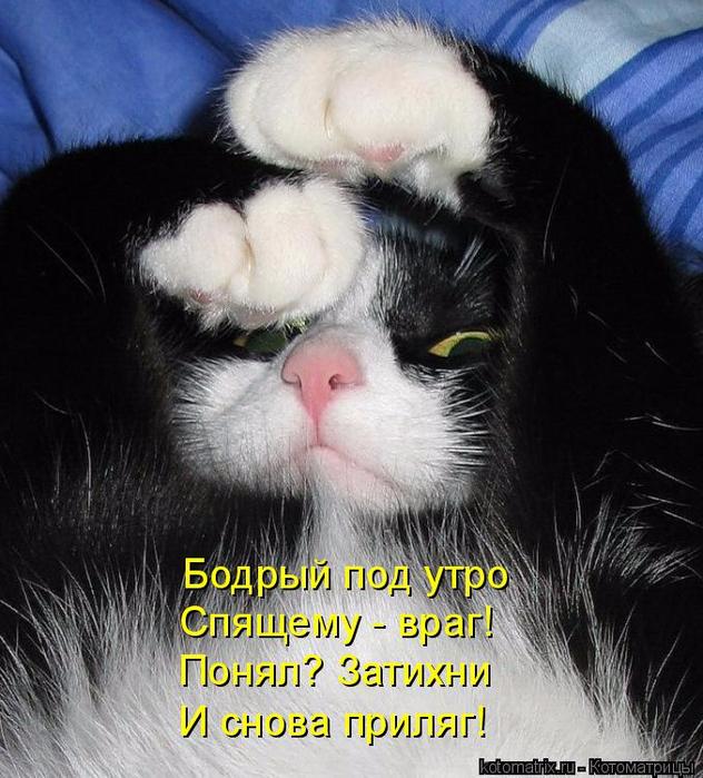 kotomatritsa_7 (632x700, 404Kb)