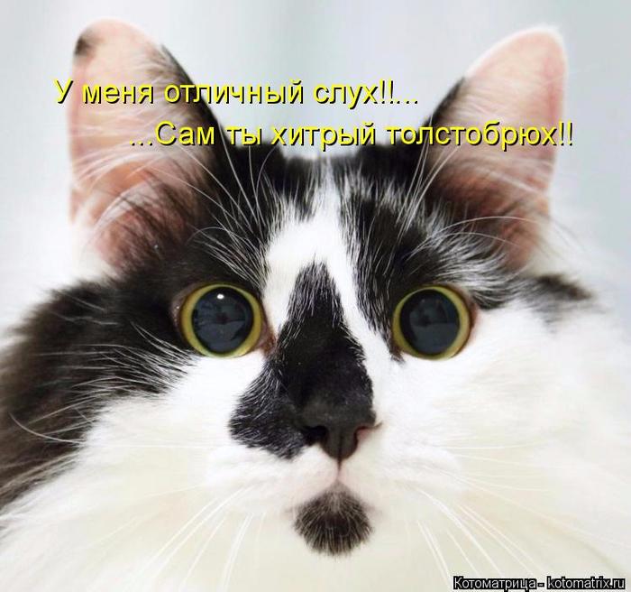 kotomatritsa_G (700x656, 356Kb)
