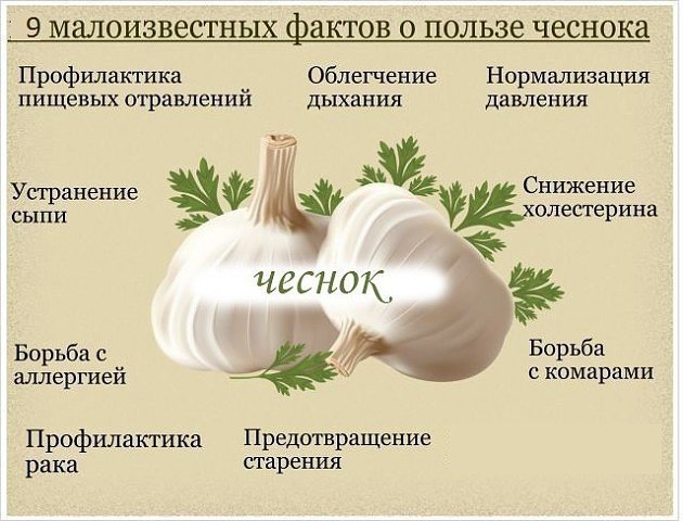 Картинки по запросу картинки про чеснок и здоровье