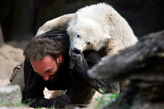 Белый медвежонок завтракает в Берлинском зоопарке— редкое видео