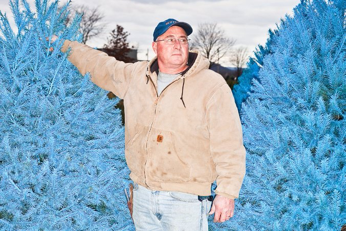 разноцветные елки Wyckoff's Christmas Tree Farm 4 (675x450, 394Kb)