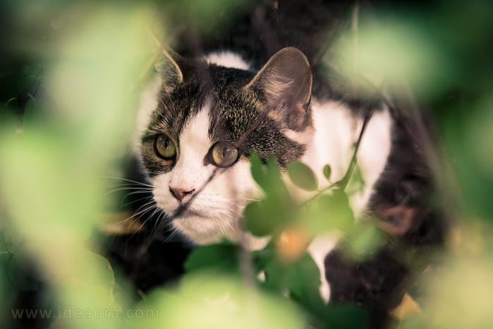 113160962_34_cat_in_an_ambush (699x466, 95Kb)