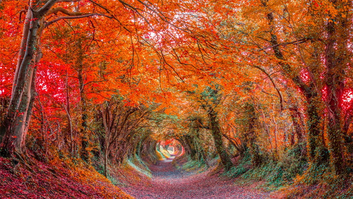 nature-tunnel-5 (700x395, 227Kb)