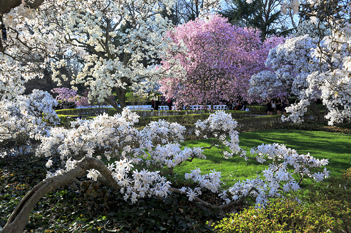 Seasons_Spring_USA_Flowering_trees_Gardens_519007_1280x852 (700x465, 657Kb)