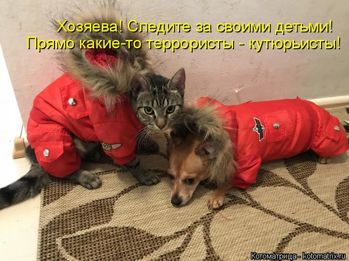 kotomatritsa_1 (700x524, 399Kb)