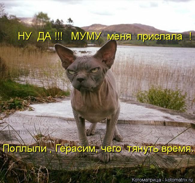 kotomatritsa_A (2) (650x610, 289Kb)