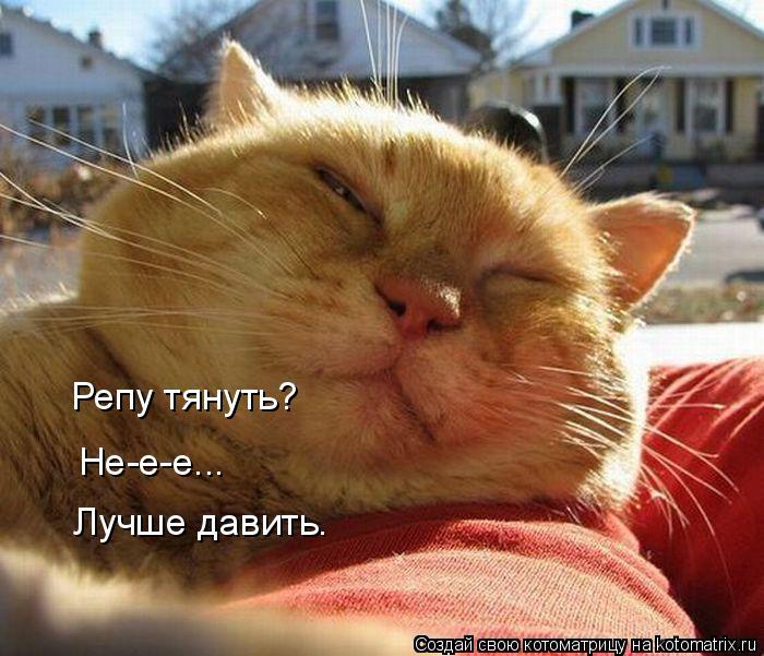 kotomatritsa_c (700x601, 321Kb)