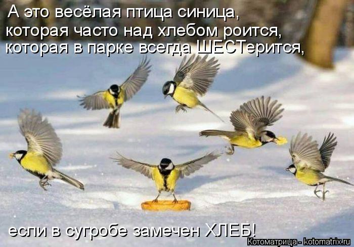 kotomatritsa_l (700x489, 249Kb)
