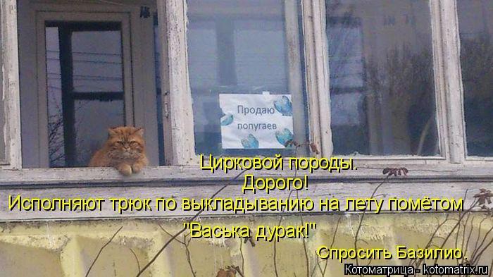 kotomatritsa_N (700x393, 244Kb)