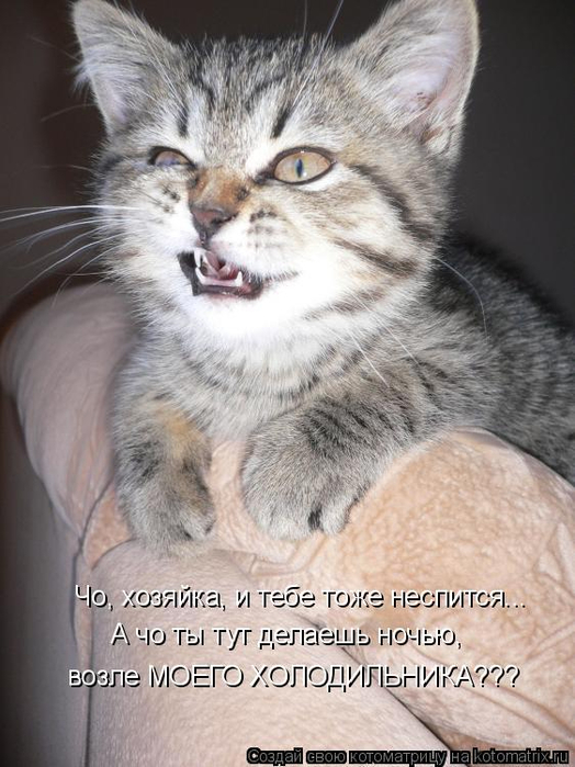 kotomatritsa_q (524x700, 334Kb)