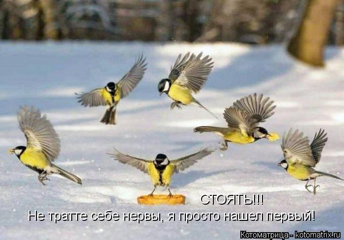 kotomatritsa_R (700x489, 212Kb)